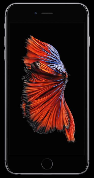 ae70e534f65 Apple iPhone 6s 32 GB Space Gray | Compra tu equipo liberado | Movistar  Catálogo de equipos liberados | Movistar